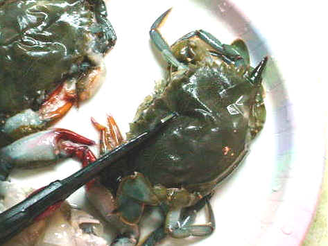 Cleaning Soft Shell Crabs